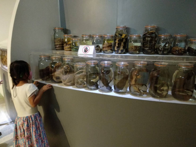 Asa exploring wet specimens-การเก็บสต๊าฟ สิ่งมีชีวิต